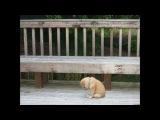 грустное_видео_про_собак((((